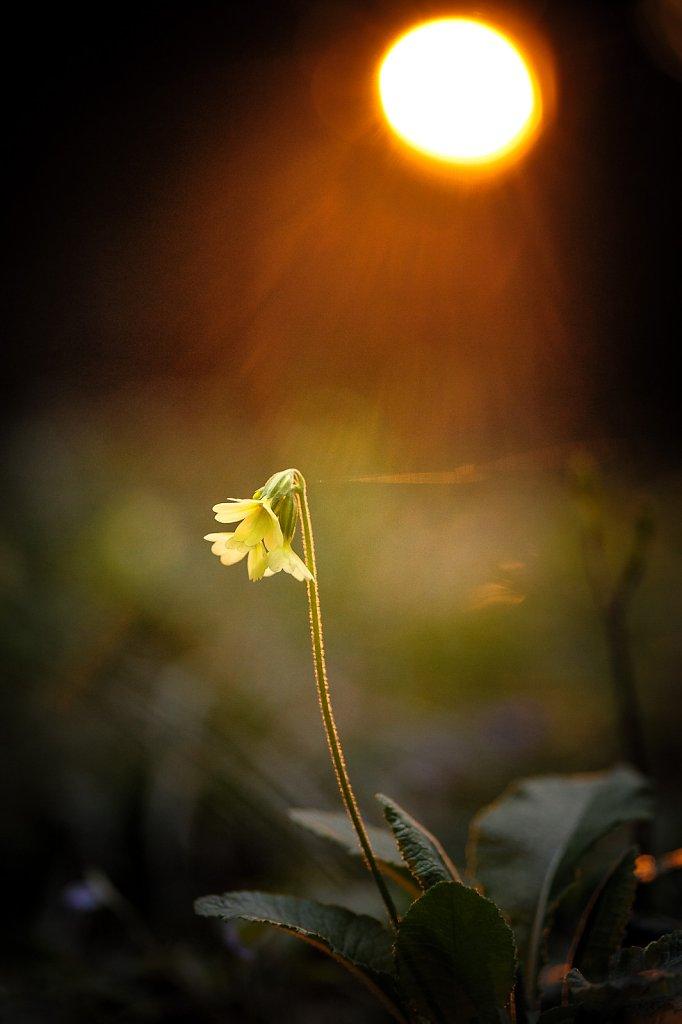 Im letzten Sonnenlicht